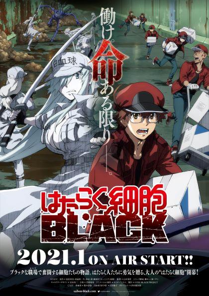 Cells at Work! BLACK ซับไทย EP1-EP11